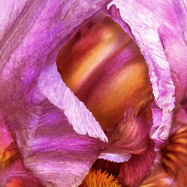 Mixed Media - Iris Moods 6 by Carol Cavalaris