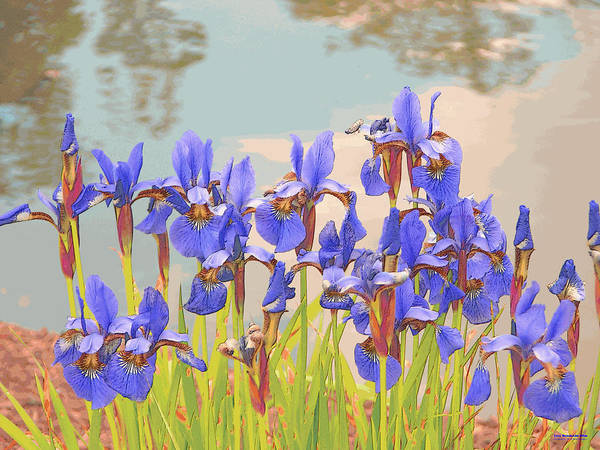 Digital Art - Iris Pondside 39m by Brian Gryphon