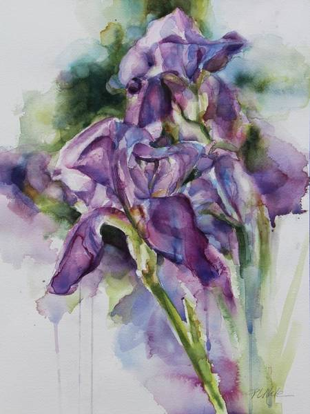 Painting - Iris Song by Tracy Male