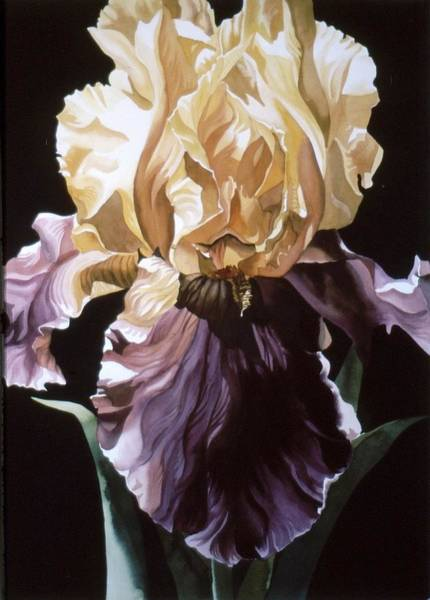 Painting - Iris With Black by Alfred Ng
