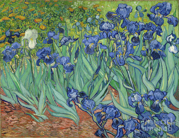 Dali Painting - Irises By Vincent Van Gogh by Esoterica Art Agency