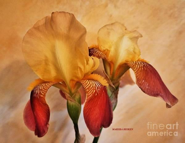 Wall Art - Photograph - Irises In The Sun by Marsha Heiken