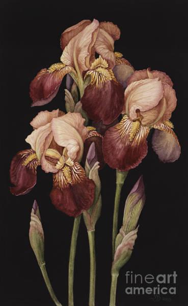 Tulip Bloom Painting - Irises by Jenny Barron