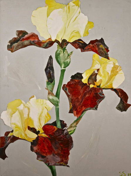 Painting - Irises-posthumously Presented Paintings Of Sachi Spohn  by Cliff Spohn