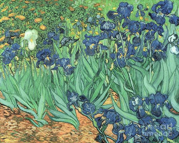 Oil Painting - Irises by Vincent Van Gogh