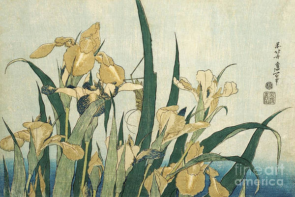 Wall Art - Painting - Irises With A Grasshopper by Hokusai
