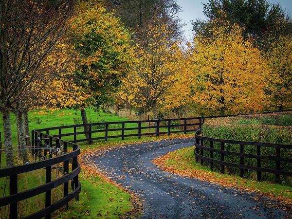 Photograph - Irish Country Drive In Autumn by James Truett
