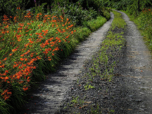 Photograph - Irish Country Road Lined With Wildflowers by James Truett