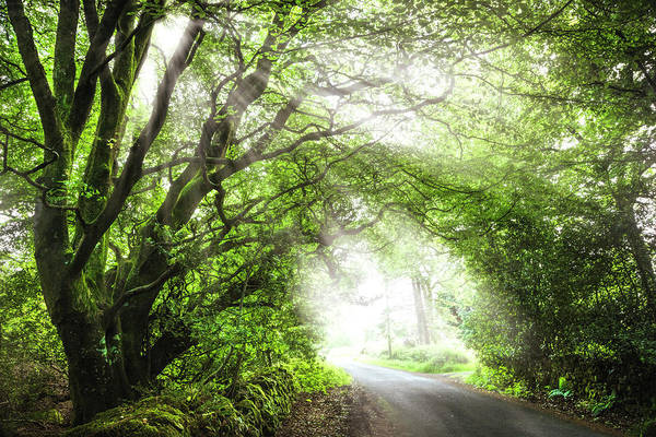 Photograph - Irish Inspiration At Dawn by Debra and Dave Vanderlaan