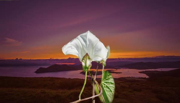 Photograph - Irish Mix.  by Leif Sohlman