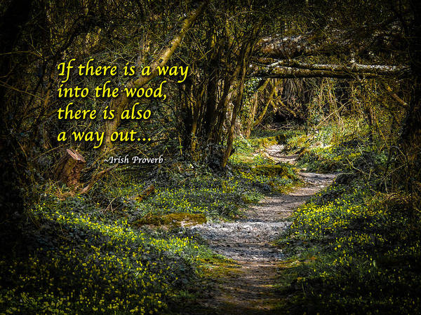 Photograph - Irish Proverb - If There Is A Way Into The Wood by James Truett