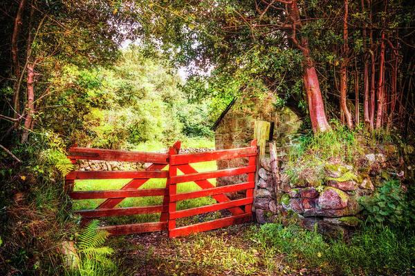 Photograph - Irish Red by Debra and Dave Vanderlaan