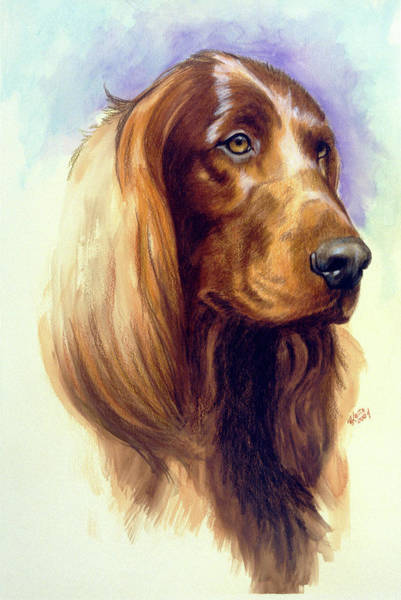 Painting - Irish Setter In Watercolor by Barbara Keith