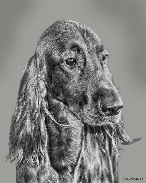 Digital Art - Irish Setter Portrait by Larry Linton