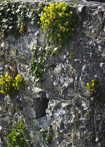 Wall Art - Photograph - Irish Stone Flowers by Teresa Mucha
