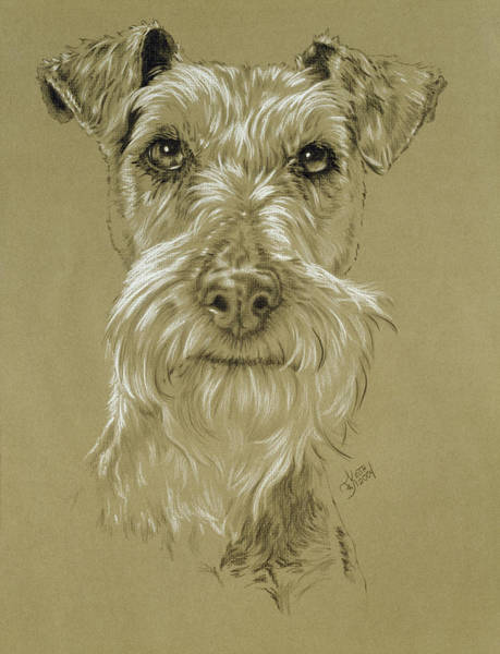 Wall Art - Drawing - Irish Terrier by Barbara Keith
