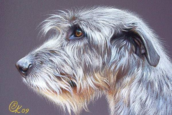 Pet Portrait Drawing - Irish Wolfhound  2 by Elena Kolotusha