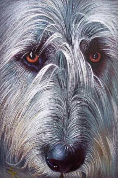 Pet Portrait Drawing - Irish Wolfhound by Elena Kolotusha