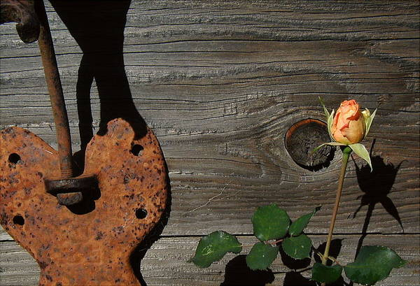 Wall Art - Photograph - Iron Flower by Mark Stevenson