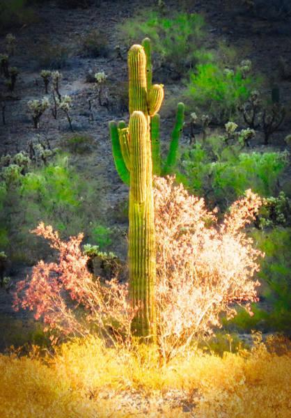 Photograph - Ironwood Saguaro Dance Vignette by Judy Kennedy