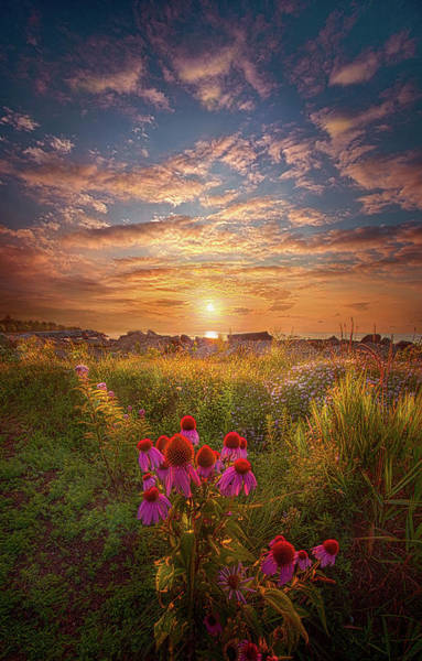 Photograph - Is Everything We Can by Phil Koch