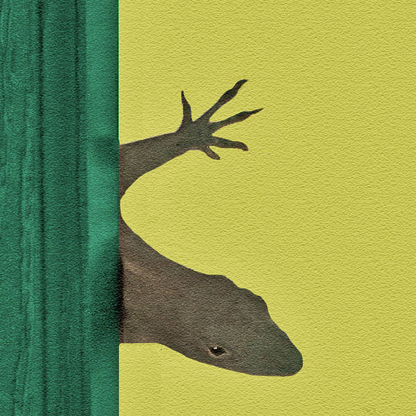 Brown Anole Wall Art - Photograph - Is The Coast Clear? by Claudia O'Brien