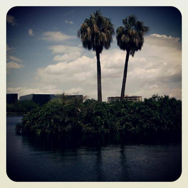 Photograph - Island Of The Herons...so I Named It by Tammy Winand