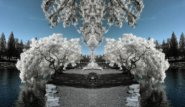 Photograph - Island Pathway by Wes and Dotty Weber