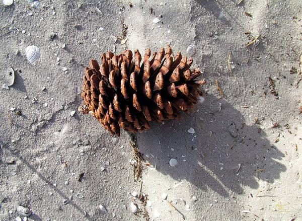 Photograph - Island Pine by Sam Davis Johnson