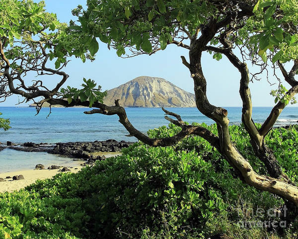 Photograph - Island Through The Trees by Jennifer Robin