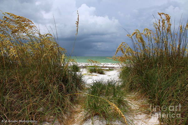 Photograph - Island Trail Out To The Beach by Barbara Bowen