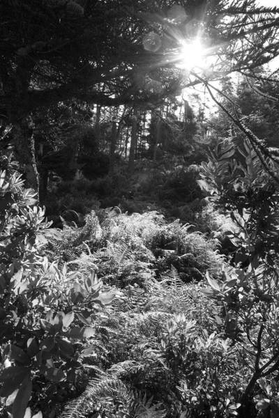 Photograph - Isle Au Haut Forest Ferns by Polly Castor