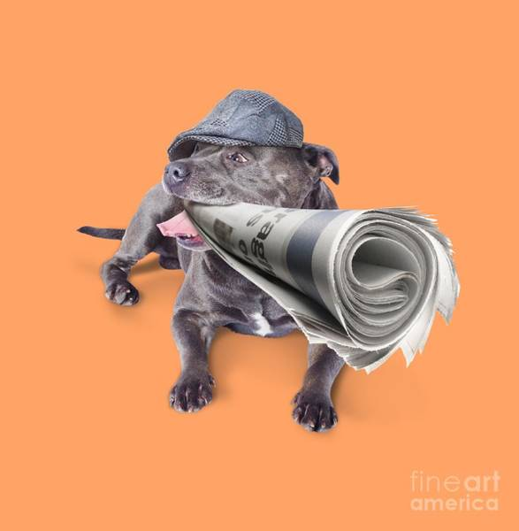 Wall Art - Photograph - Isolated Newspaper Dog Carrying Latest News by Jorgo Photography - Wall Art Gallery