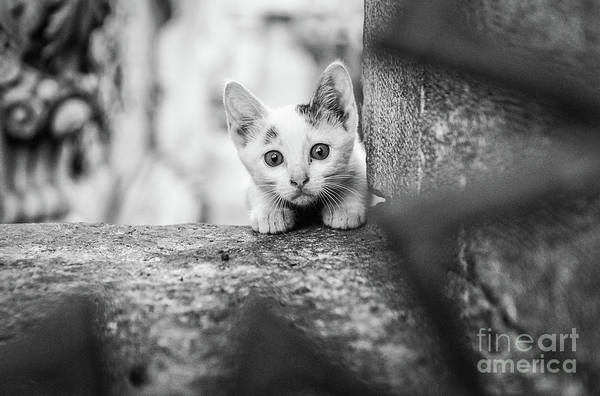 Wall Art - Photograph - Istanbul Street Kitten by Dean Harte