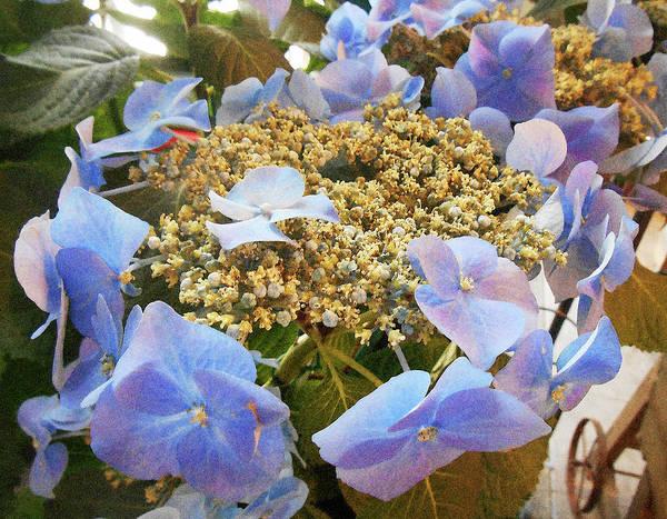 Hydrangea Photograph - Italian Flower Market Hydrangea by Irina Sztukowski