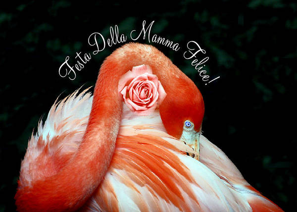 Photograph - Italian Happy Mothers Day Flamingo by Donna Proctor