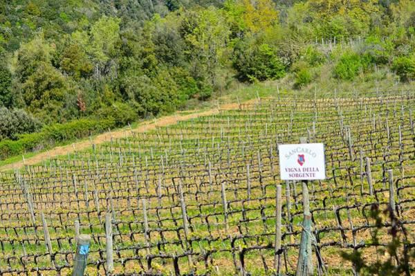 Photograph - Italian Vineyard by Chris Alberding