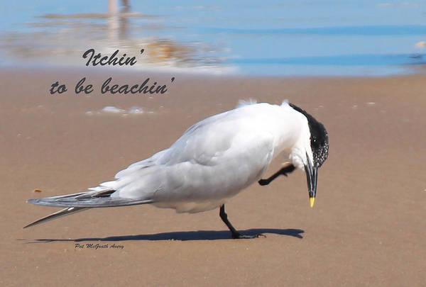 Photograph - Itchin' To Be Beachin' by Pat McGrath Avery
