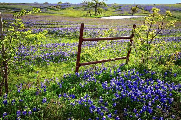 Photograph - It's A Bluebonnet Kind Of Day by Lynn Bauer