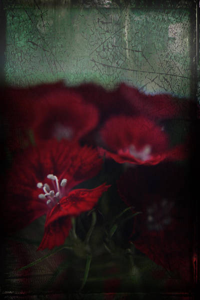 Stamens Photograph - It's A Heartache by Laurie Search