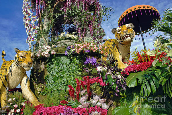 Tournament Of Roses Photograph - Its A Jungle Out There by David Zanzinger