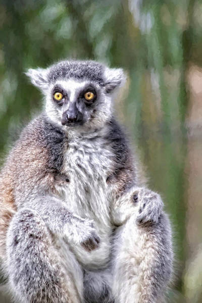 Photograph - It's A Lemur Kind Of Day by Alice Gipson