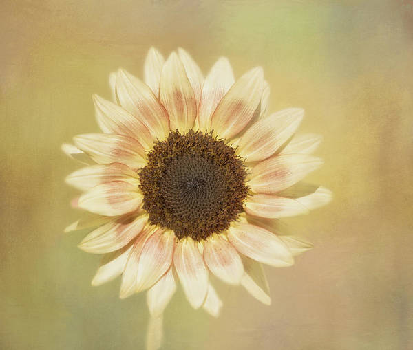 Photograph - It's A Sunshine Day by Kim Hojnacki