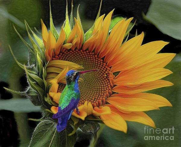 Photograph - Its All So Beautiful by John Kolenberg