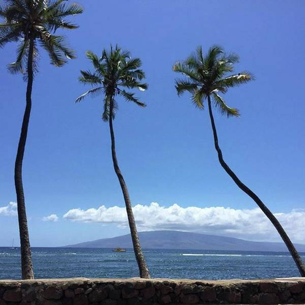 Wall Art - Photograph - It's Aloha Friday!!! #maui #mauihawaii by Darice Machel McGuire