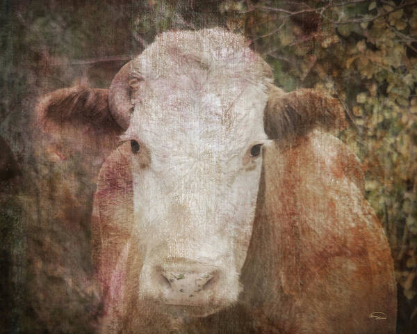 Digital Art - It's Been A Tough Life Darlin' by Ramona Murdock