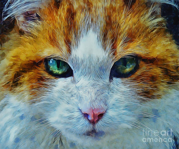 White Cat Mixed Media - Its In The Eyes by Ian Mitchell