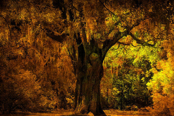 Artful Photograph - It's Not The Angel Oak by Susanne Van Hulst