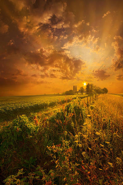 Photograph - It's Not The Heat. It's The Humidity by Phil Koch