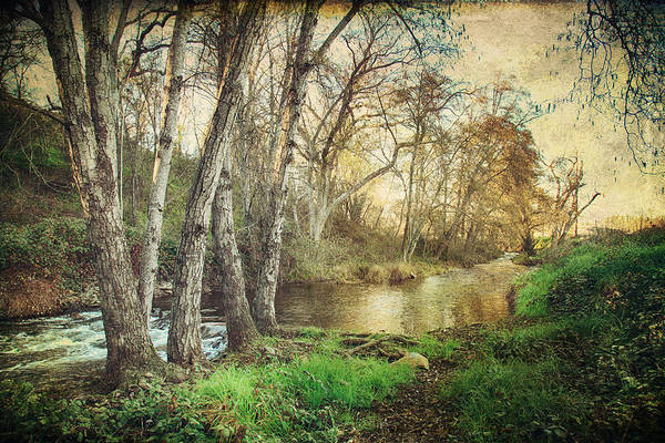 Northern California Wall Art - Photograph - It's Passed Me By by Laurie Search